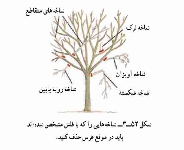 آموزش هرس درختان